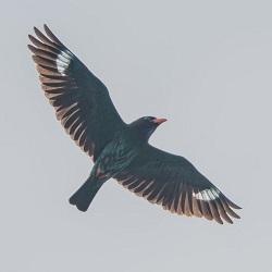 [스압] 신비로운 여름철새 파랑새 관찰기