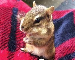 지난번에 다쳤다던 다람쥐가 다시 찾아옴 (긴글 주의)